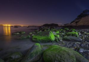 Green Rocks (1 of 1).jpg